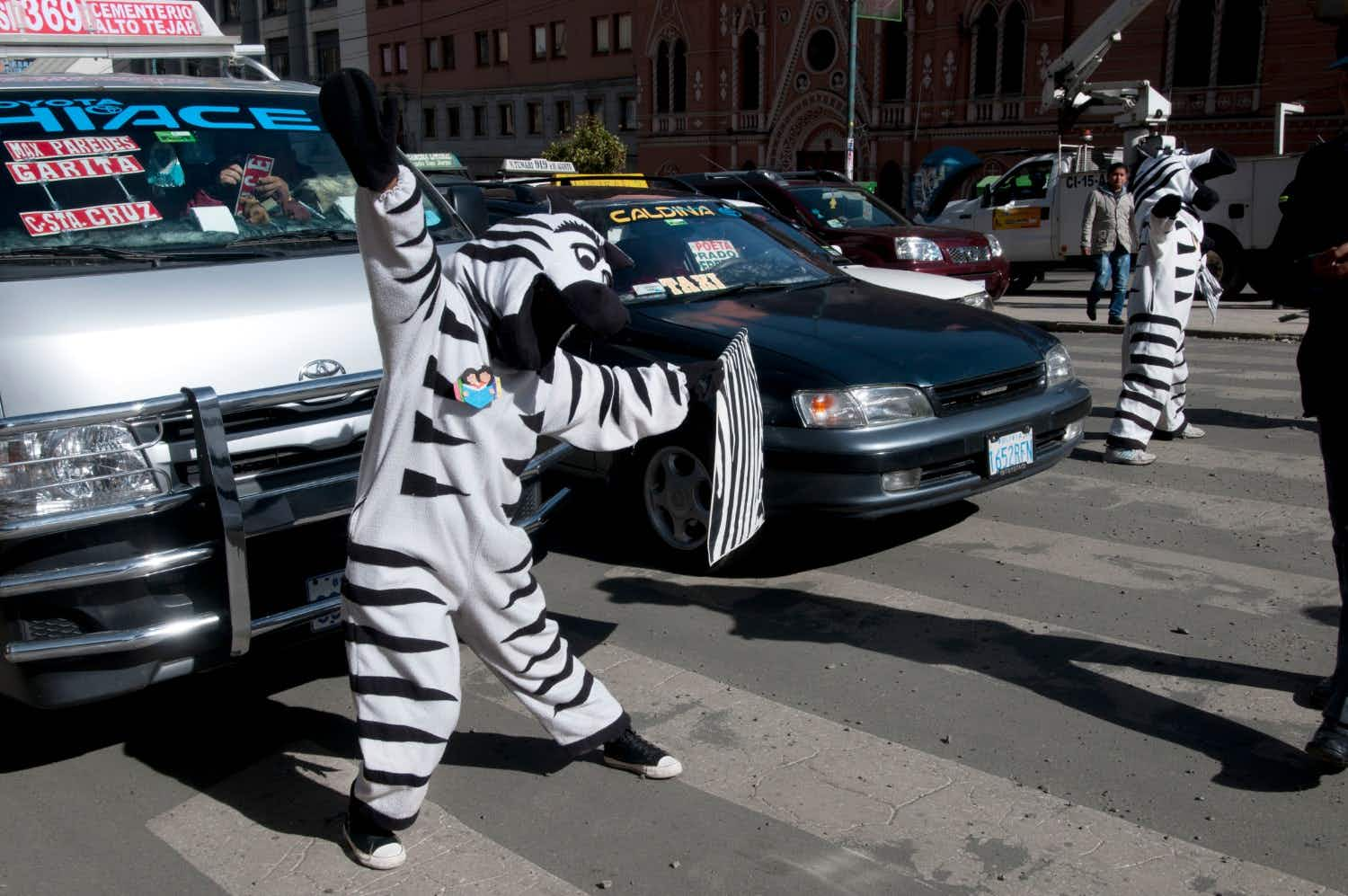 How these friendly zebras are helping Bolivian road-users