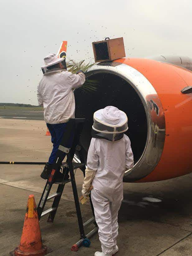 Bees jump queue and board plane causing delays in Durban