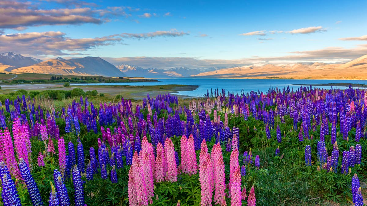 How travellers can make a pledge to look after New Zealand before they arrive