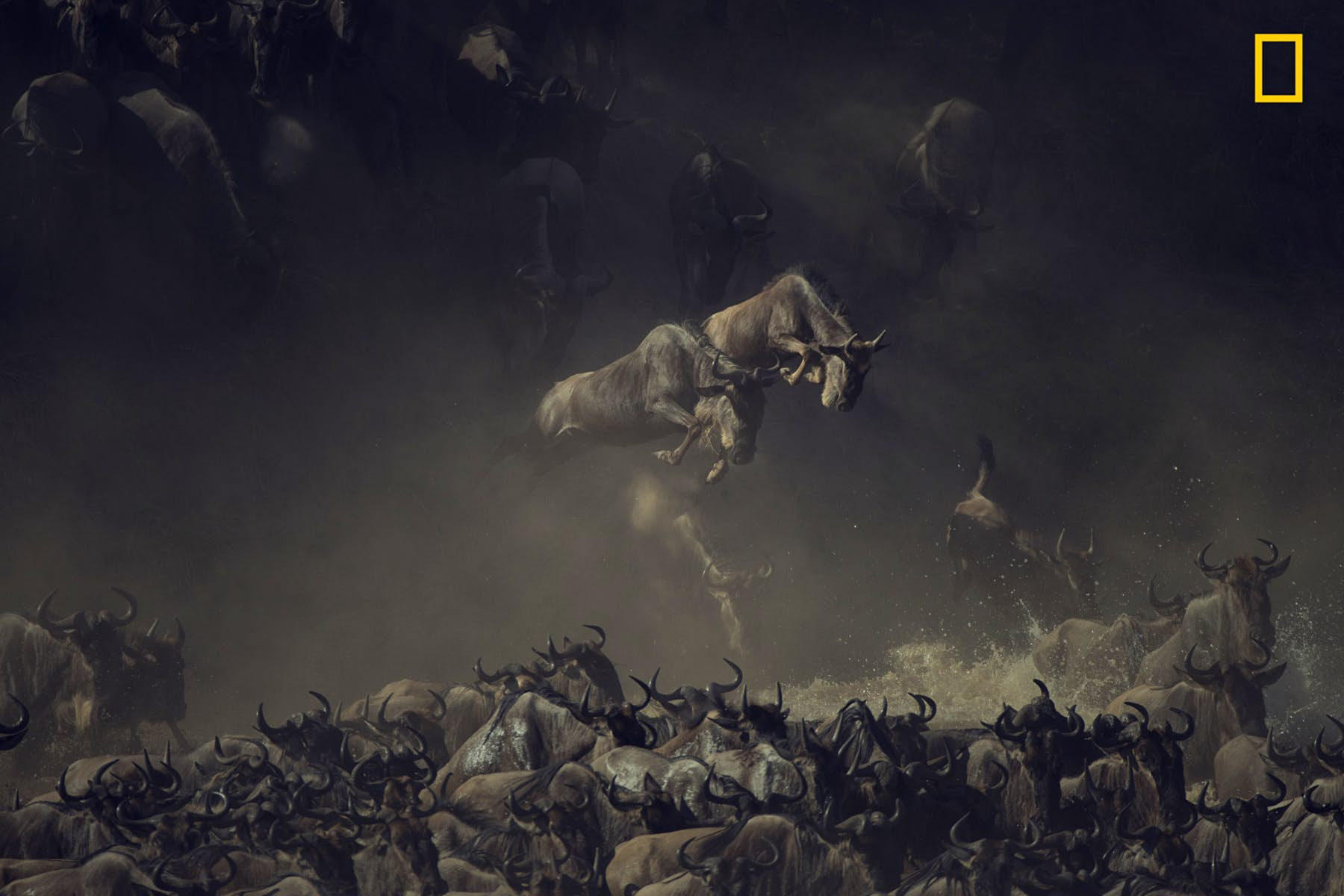"""This is the picture that won first place in the Wildlife category. Photographer Pim Volkers captured it at Tanzania's Mara river early in the morning, when a herd of wildebeests crossed it. """"The layering of dust, shade and sun over the chaos of wildebeests kicking up water gives this picture a sense of mystique and allure, almost like an old painting,"""" it reads in the caption provided by the photographer to National Geographic. Image courtesy of Pim Volkers/2018 National Geographic Photo Contest"""
