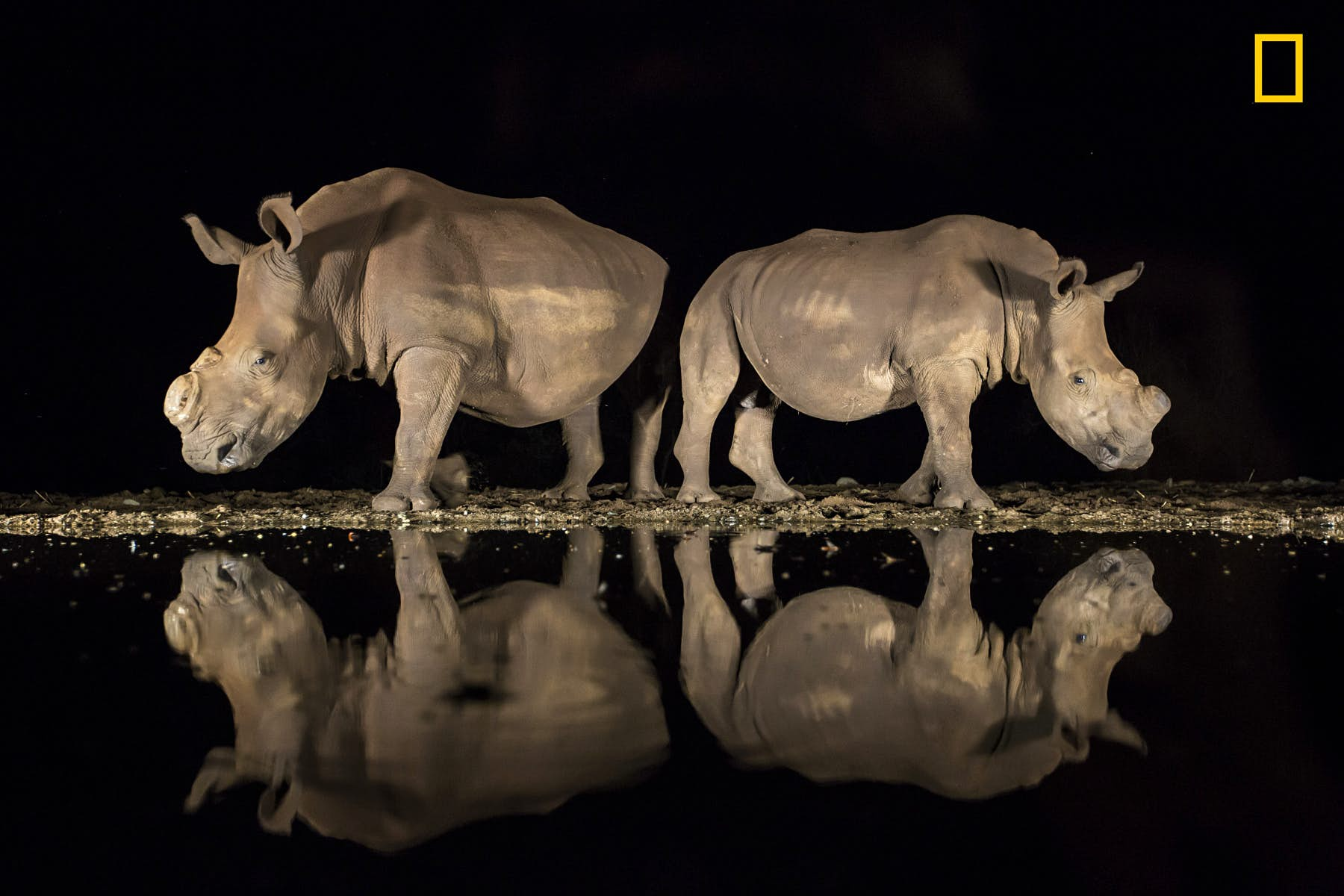 Third place in the Wildlife category went to Alison Langevad for this picture of two southern white rhinoceroses, appearing from the shadows late at night to drink from a watering hole in the Zimanga Game Reserve in South Africa. Both animals have been dehorned to deter poachers from hunting them. Image courtesy of Alison Langevad/2018 National Geographic Photo Contest