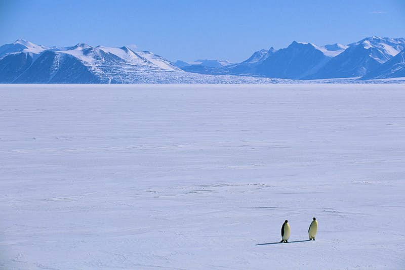 Travel News - EMPEROR PENGUINS ON SEA ICE OFF ANTARCTIC DRY VALLEYS