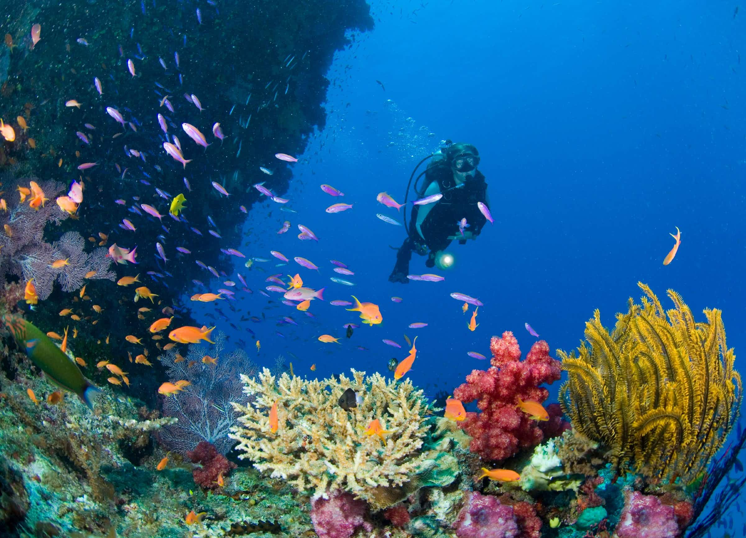 Is coral gardening going to save South Pacific reefs from bleaching?