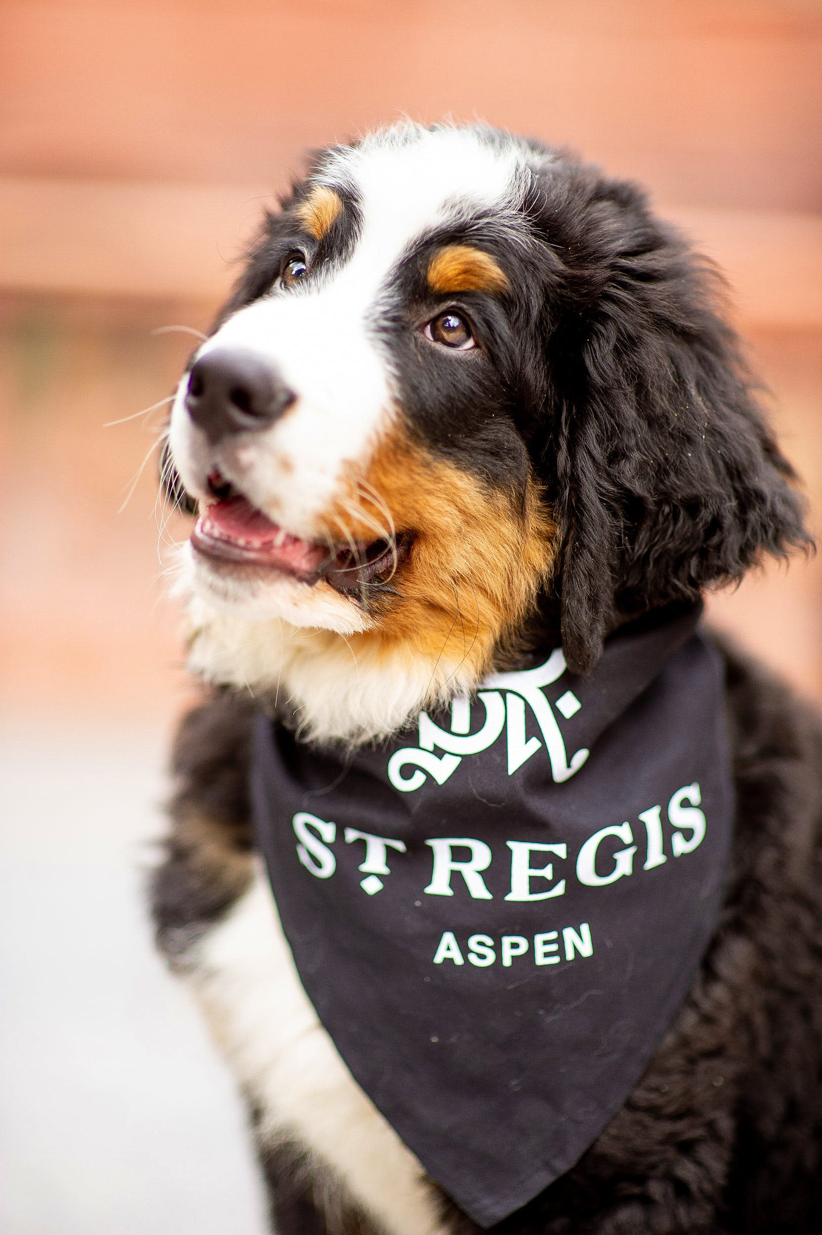 An Adorable Dog Named Kitty Will Greet You At This Aspen