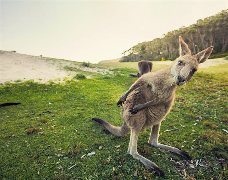 Travel News - australia