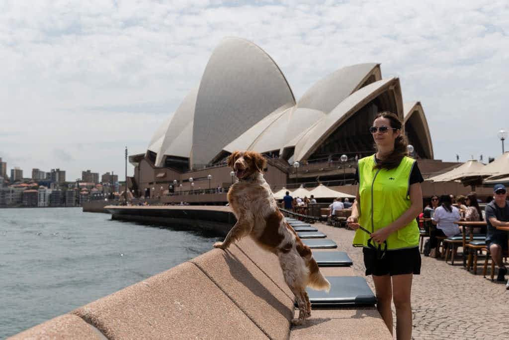 Patrol dogs are protecting visitors' fries from seagulls at the Sydney Opera House