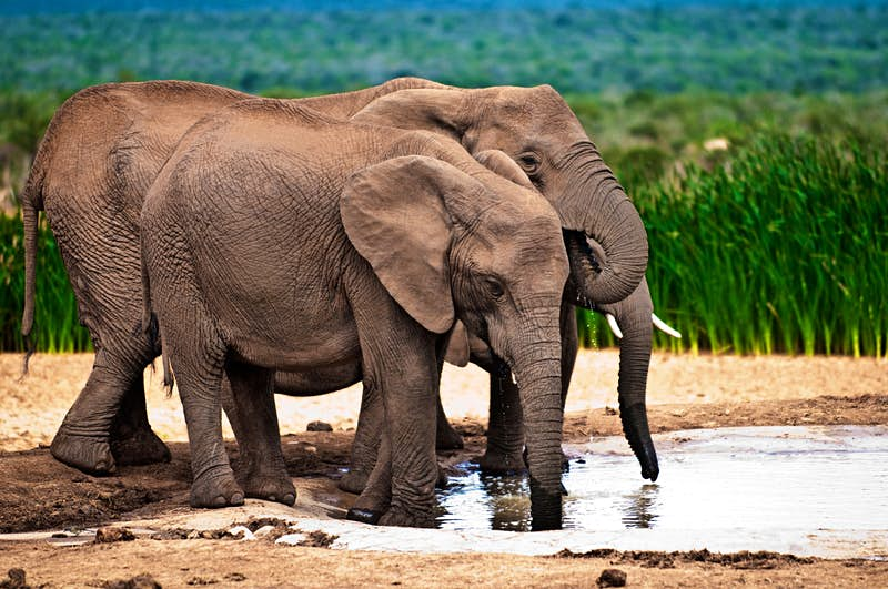 Travel News - south africa