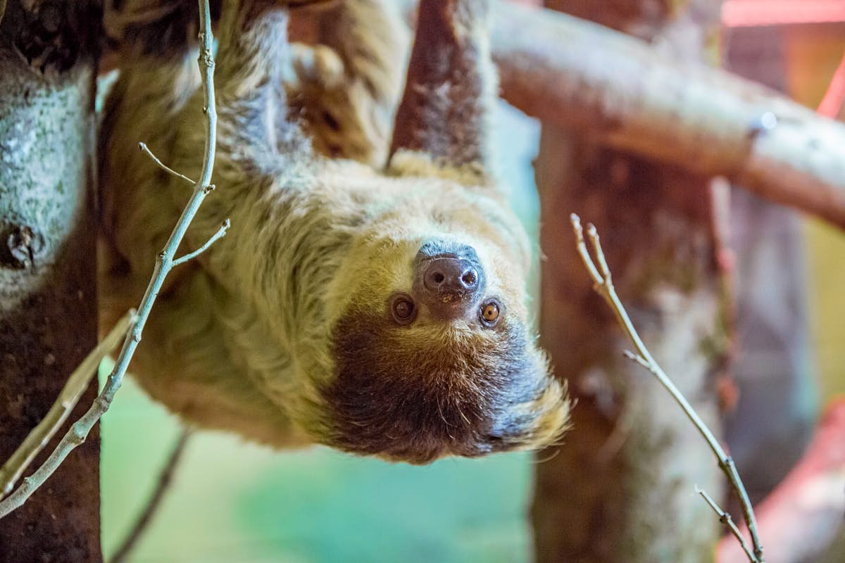 A retirement home for sloths opens in Wales (and yes, you can visit)