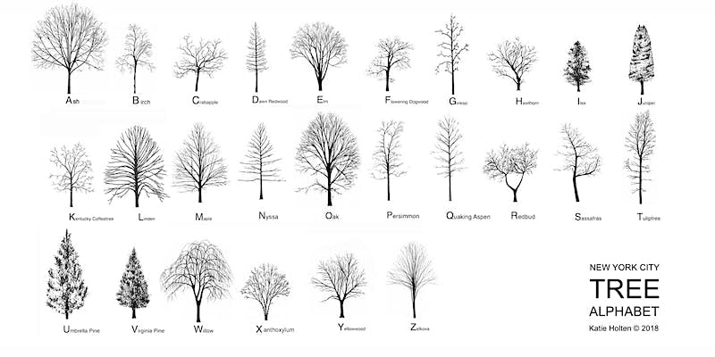 New York City trees now have an alphabet of their own