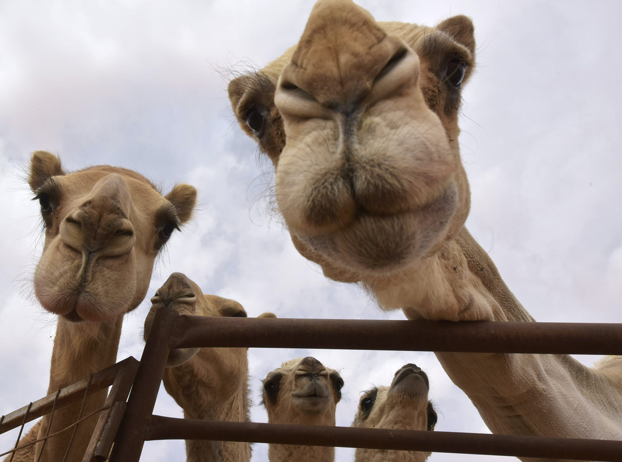 Travelodge Bristol – The straw that broke this camel's back – Let's Talk About That