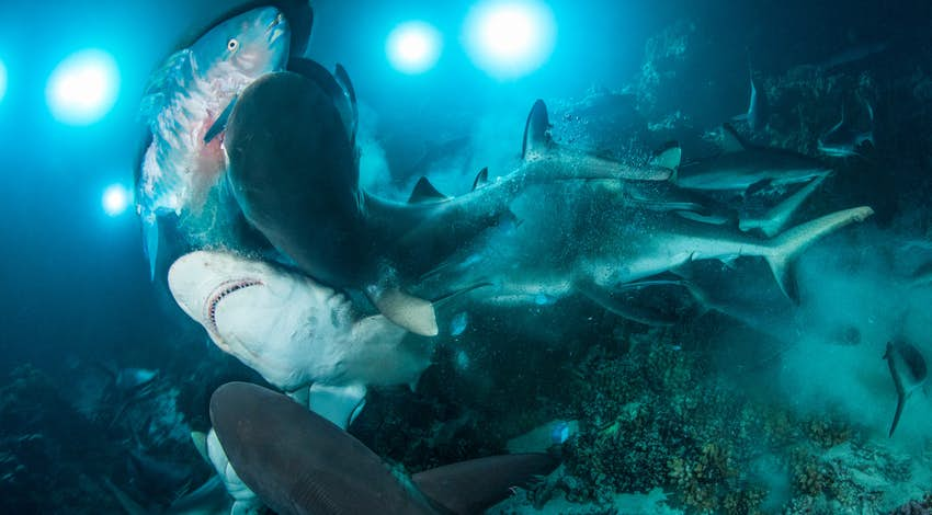 See the most amazing underwater photographs in the world