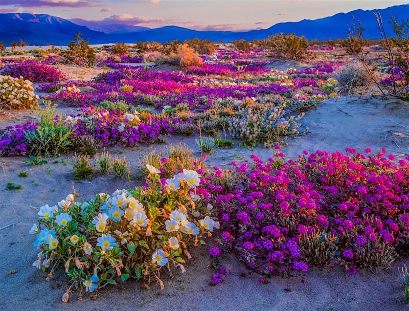 Travel News - Springtime adventure; desert solitude; a new beginning remote getaway