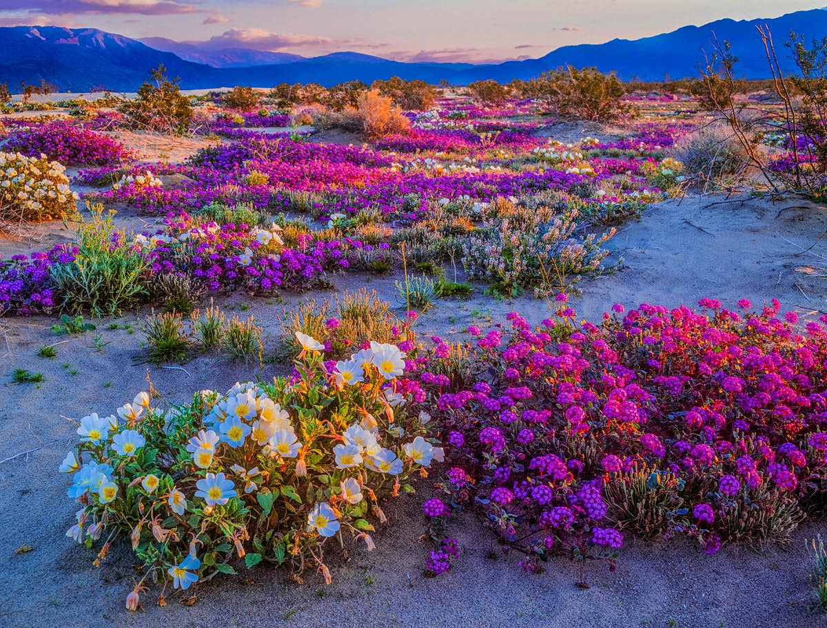 California may see another superbloom thanks to the weather