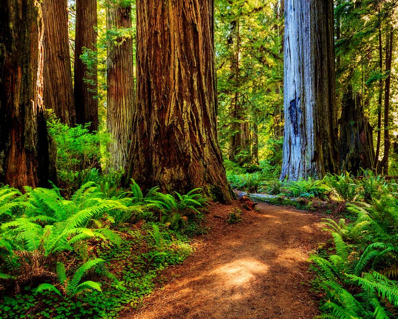 The Del Norte County in California, more specifically the area of Redwood National Park, was used as the backdrop for the forest moon of Endor, where the final battle of The Return of the Jedi takes place (and also the homeworld of the Ewoks, arguably some of the cutest inhabitants of the galaxy far far away). Photo by kurdistan/Shutterstock