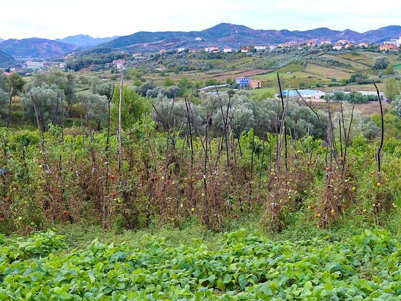 Travel News - farm-Albanian-countryside