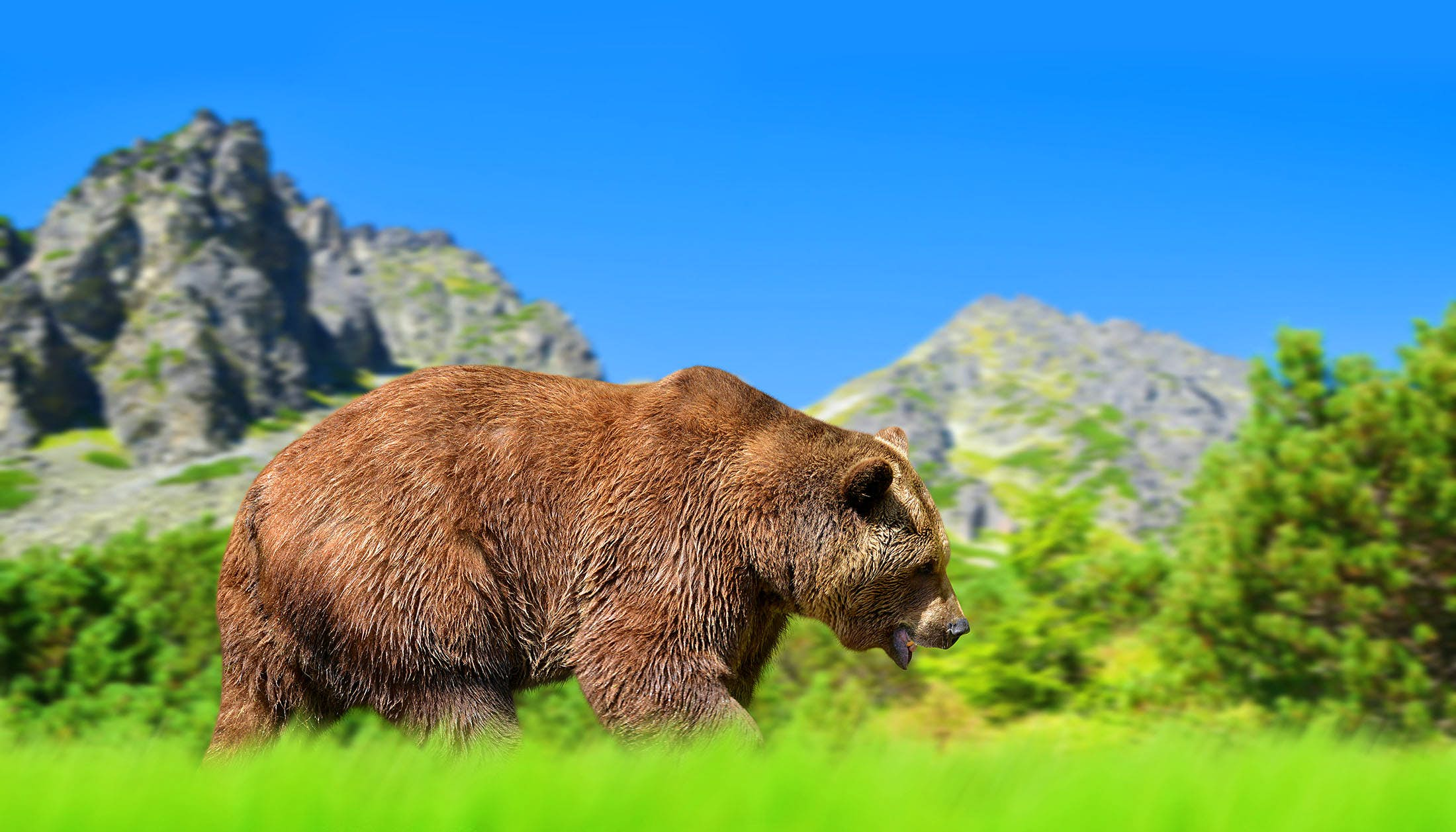 Travel News - Brown bear in mountain landscape.