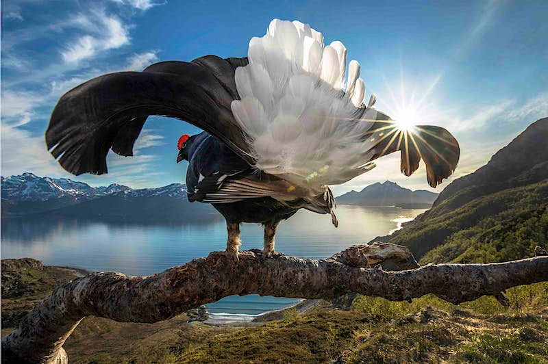Jaw-dropping moments in nature captured in this photography competition