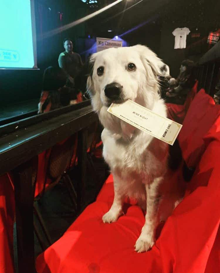 This Texas movie theater lets you bring your dog and drink bottomless wine