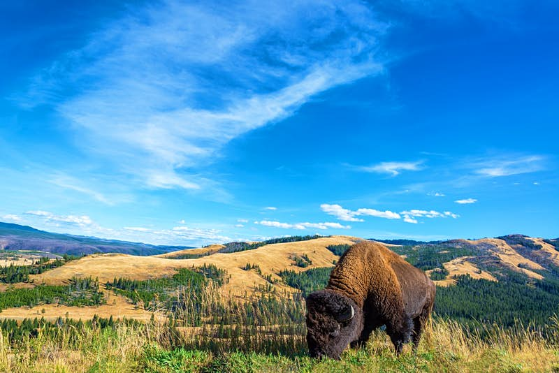 Travel News - yellowstone