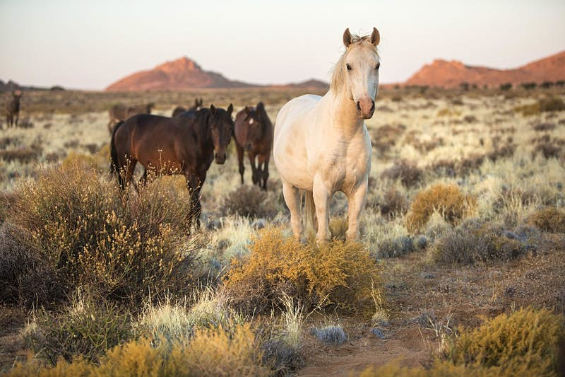 Here's how Namibia plans to save its famous wild horses from extinction - Lonely Planet