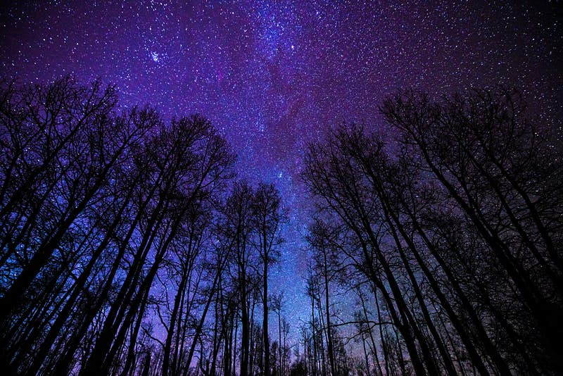 Tall trees under the stars at night