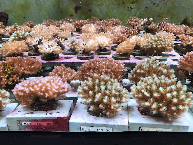 coral nursery at the Museum of Underwater Art