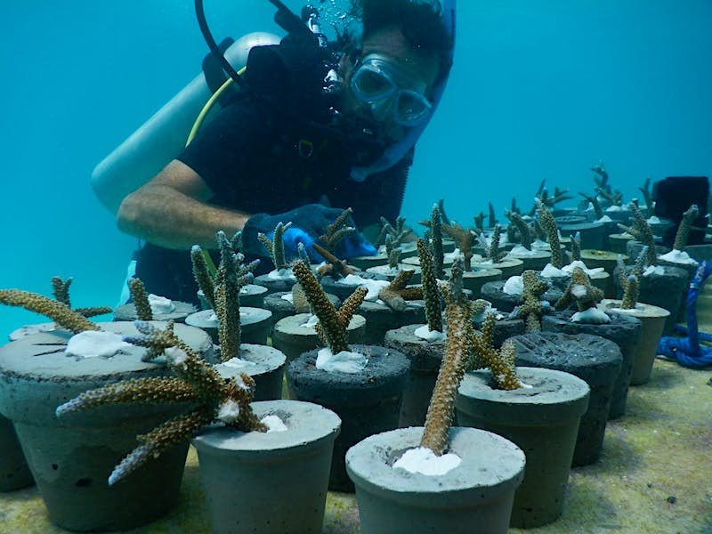 The greenhouse will include a coral nursery designed to encourage new growth.