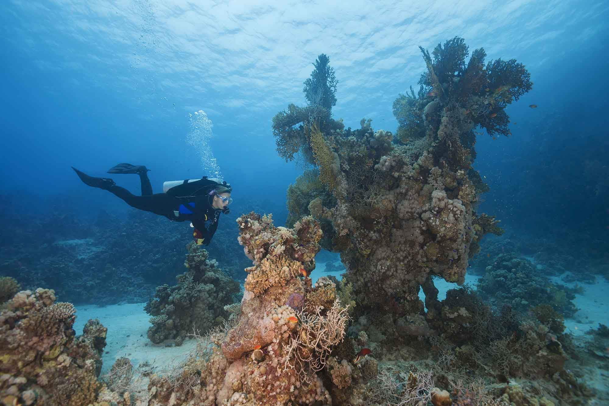 Coral reefs in the Red Sea may save reefs around the world  – here's how you can help