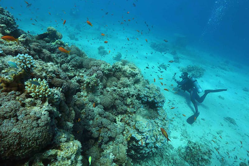 Scientists encouraged by Red Sea coral reef findings