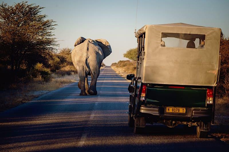 Travel News - elephant