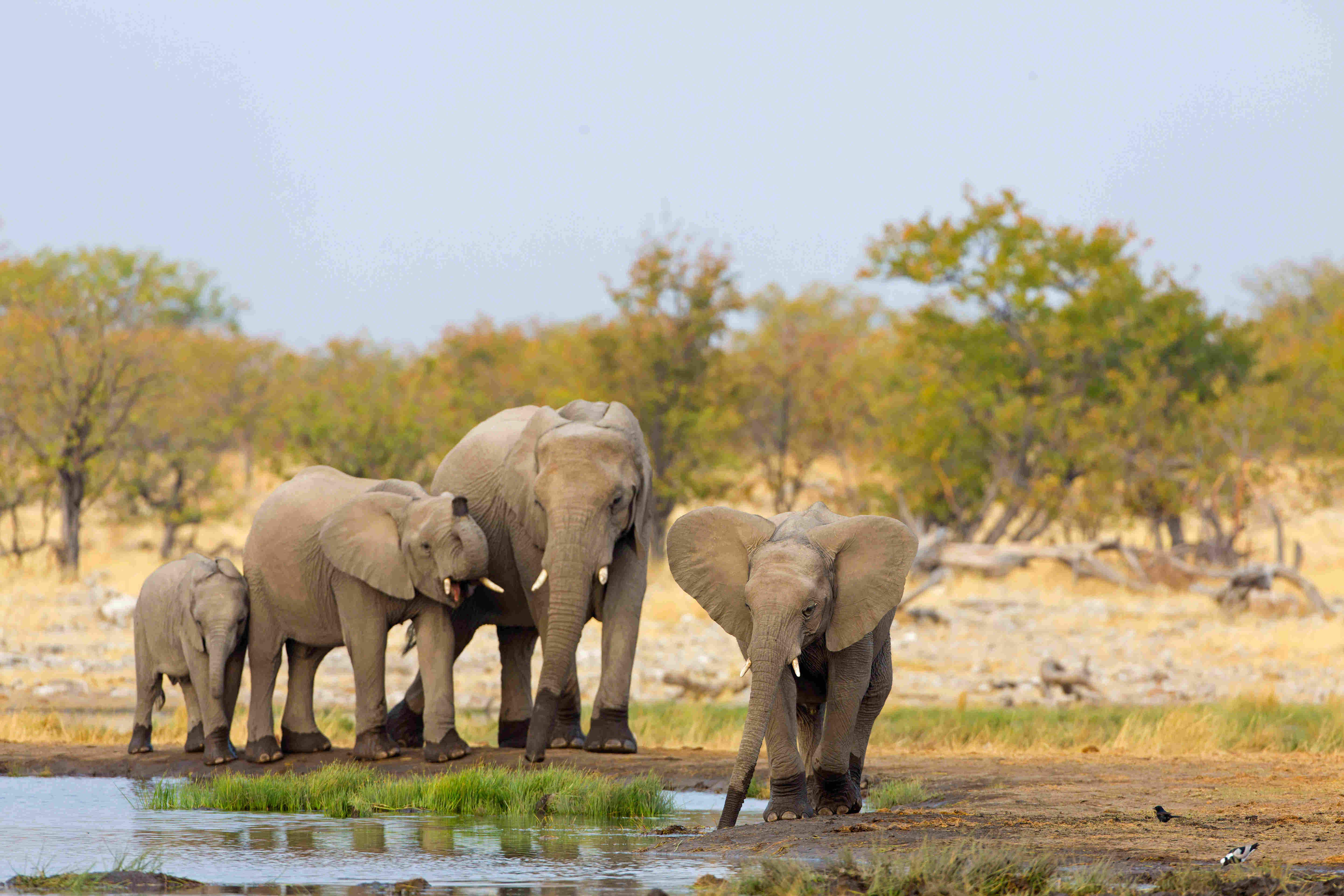 Poaching rates drop in Namibia and Tanzania