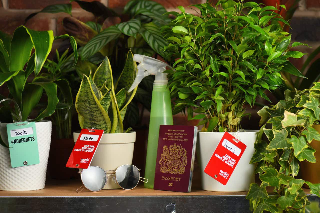 Keep your plants alive when you go on holiday by checking them into this 'plant hotel'