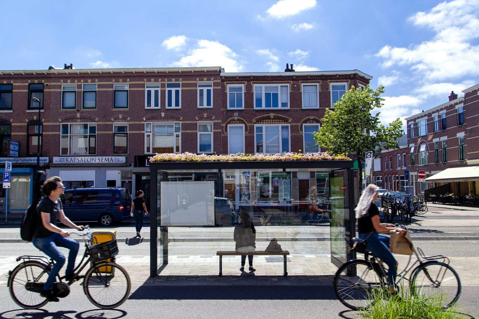 Dutch city transforms over 300 bus stops into 'bee stops'