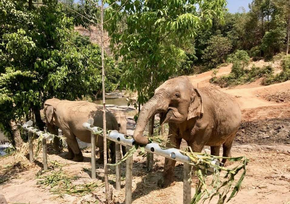Chang Chill, an observation-only, truly elephant-friendly camp has opened in Thailand