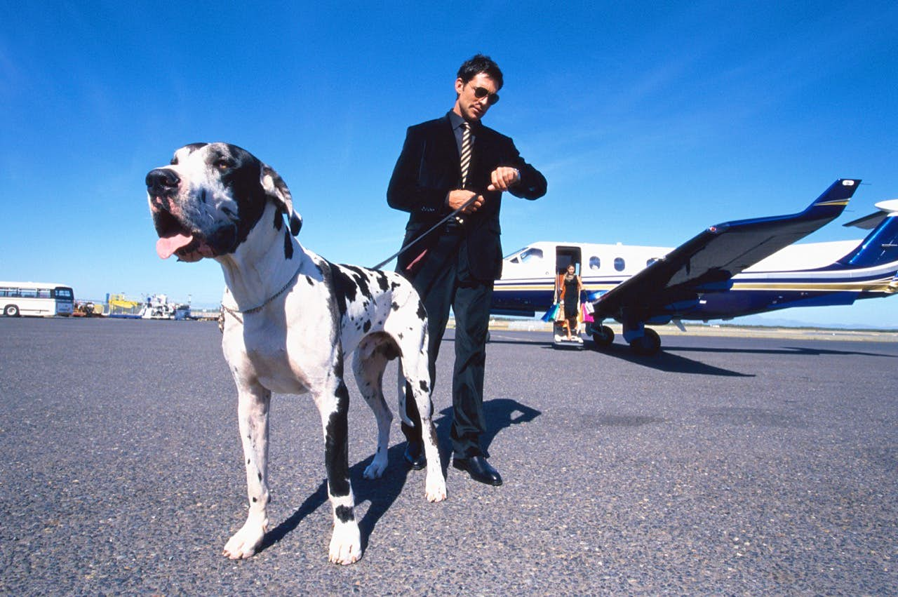 Young couple alighting from plane, man with dog