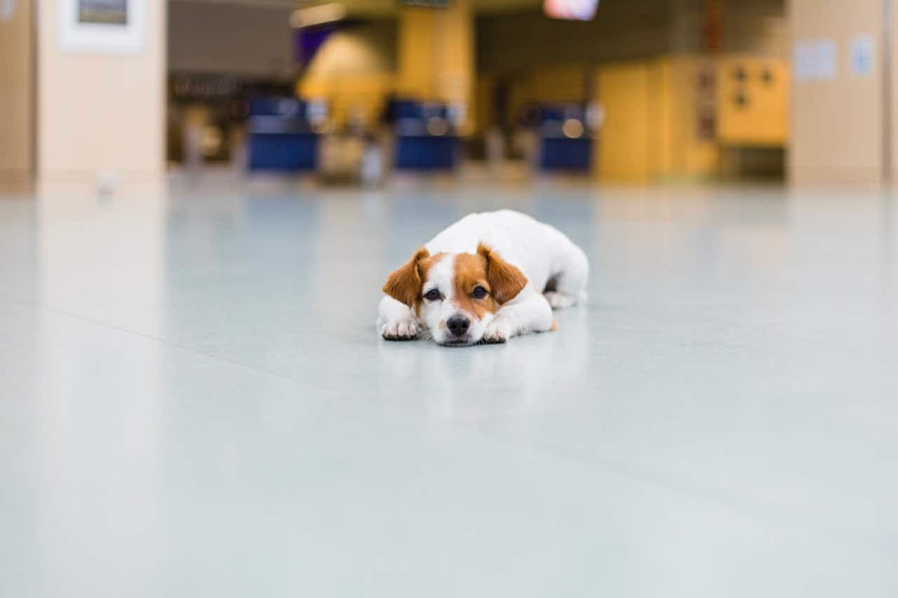 Are new rules coming for emotional support animals?